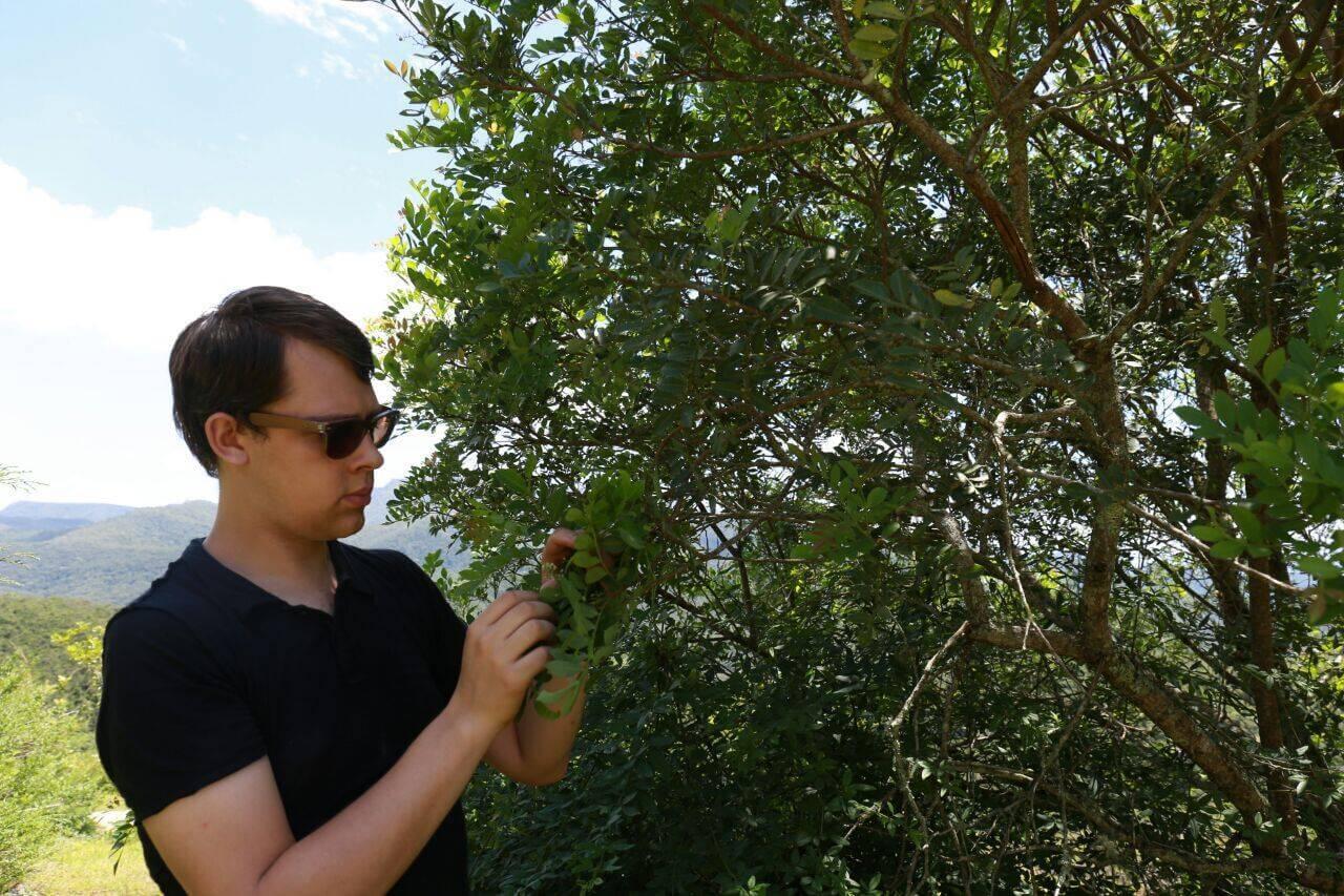 Arnaud vanille et épices, importateur, producteur d'épices au Brésil