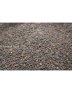 Poivre Noir du Sri Lanka, achat vente conseils poivre noir du sri lanka