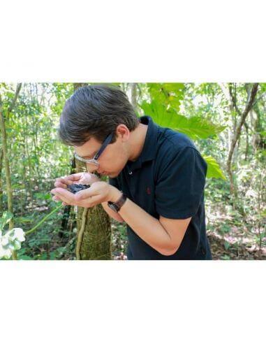 Arnaud Sion sur la route de la fève tonka d'amazonie