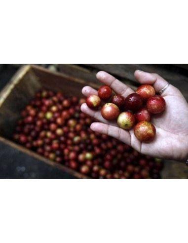 Le Fruit du Camu Camu une Baie d'Amazonie
