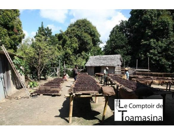 Vanille Bourbon Madagascar - Producteur à Madagascar Partenariat