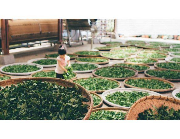 Découvrez ce coffret de thés verts et noirs d'origines