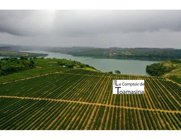 Pepper plantation in Brazil - Espirito Santo