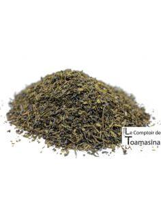 Chá Verde Indiano Jardim Nellimyampathy
