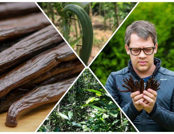 Arnaud, spécialiste en gousse de vanille