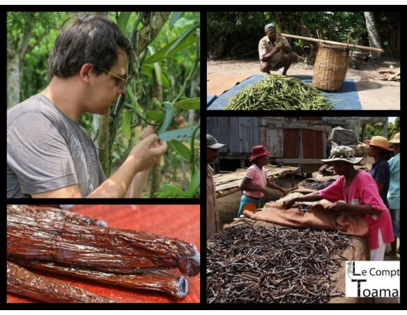 Producteur de vanille à Madagascar