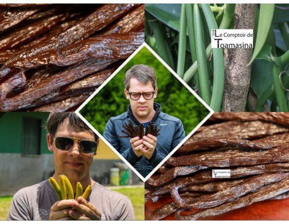 gousses de vanille noire bourbon de Madagascar