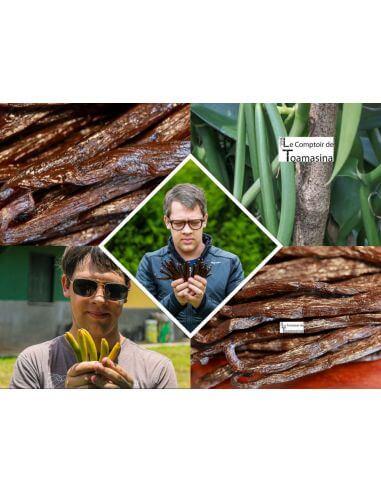 50 Vanilla Beans Bourbon Madagascar -...