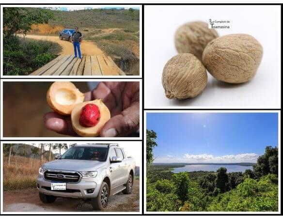 Noix de muscade issue des meilleures plantations. Une saveur intense - Arnaud Chercheur d'épices et de vanille