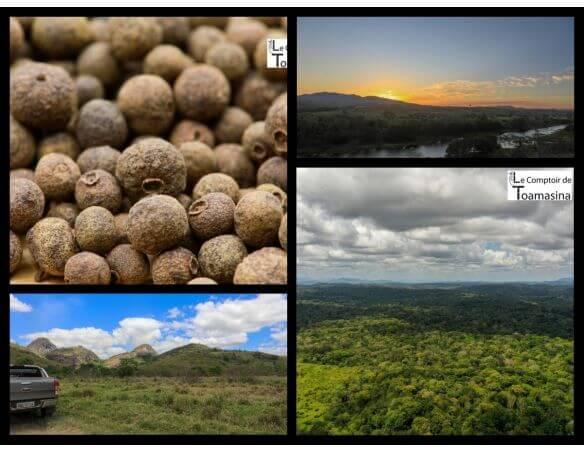 Bahia une terre de poivres et d'épices