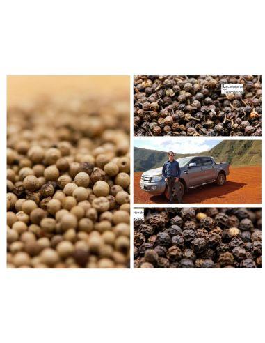 Caixa 9 Pimentas em grãos