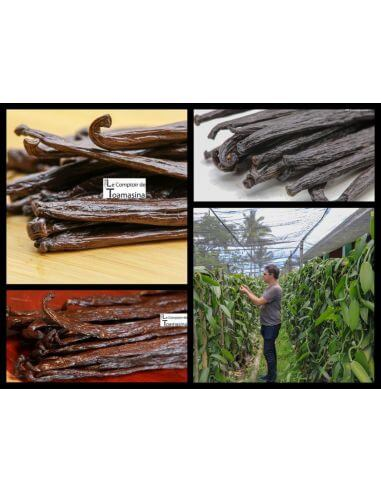 Box vanilla pods - 50g - 3 Origins