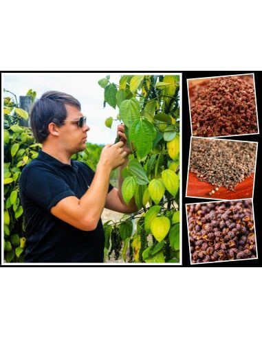 Poivres du monde - Coffret - Sélection Arnaud, chercheur de poivres en grains