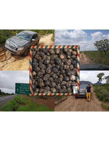 Poivre Noir Rio Tocantins - Brésil