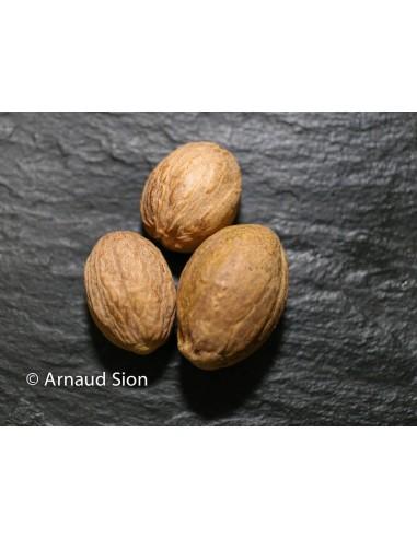 Noix de Muscade du Brésil, Noix de Muscade Haut de gamme, belle noix de Muscade brésilienne