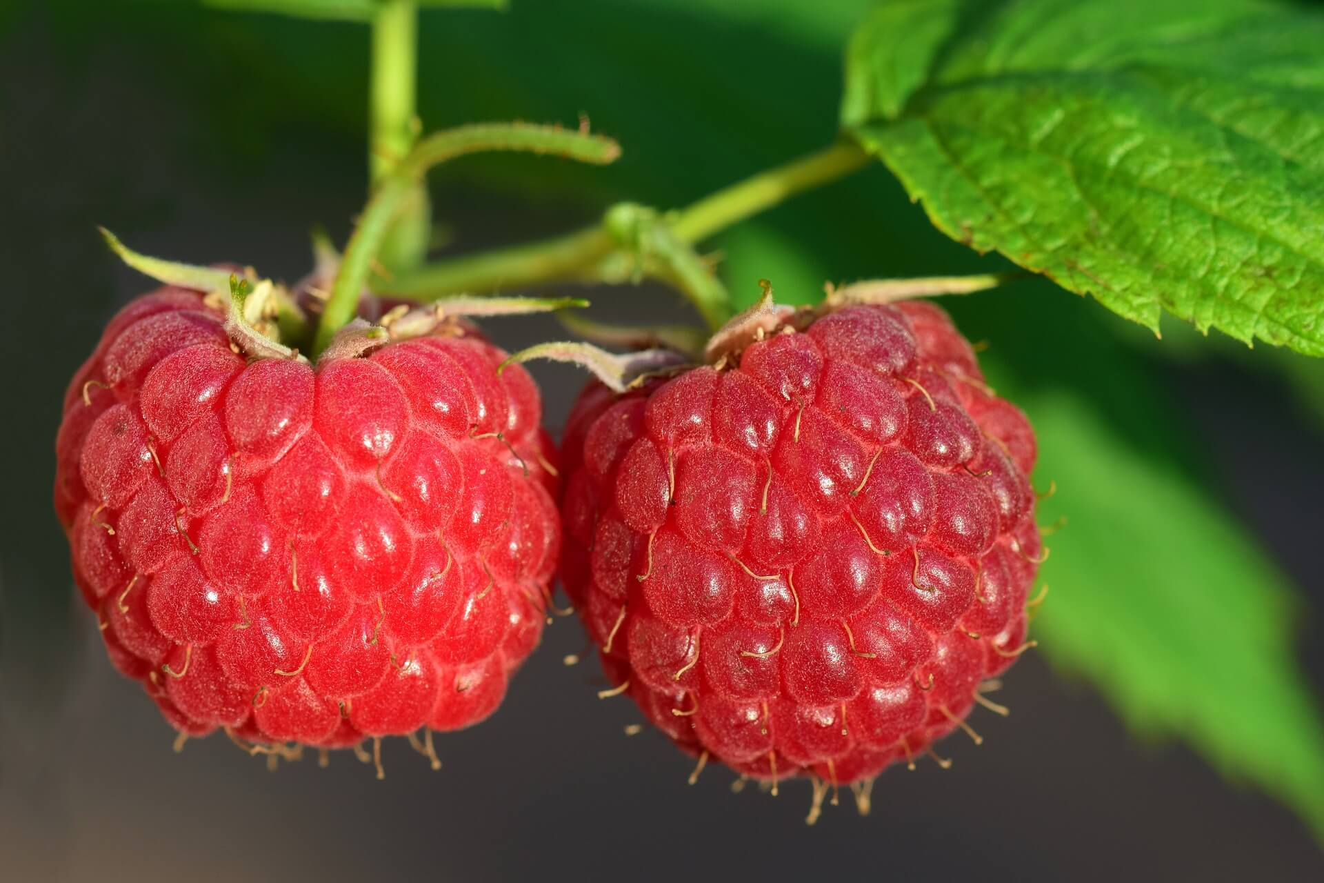 Natural Aroma of Raspberry Culinary Pastry