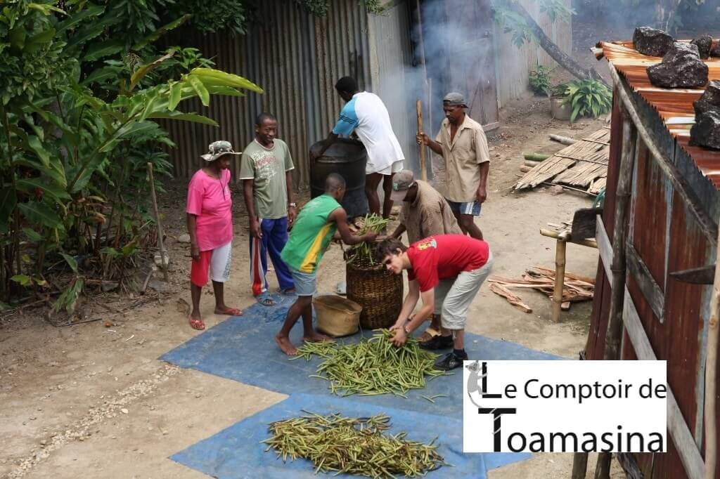 Compra e venda de baunilha de Madagascar com o melhor preço