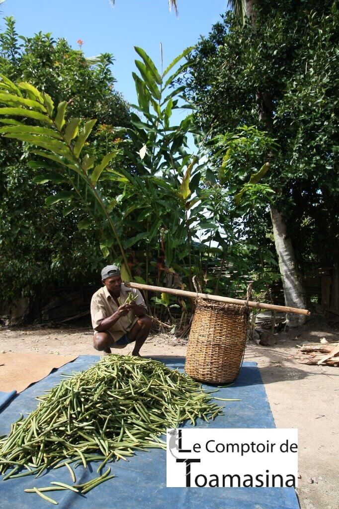 Producteur de vanille bourbon de Madagascar