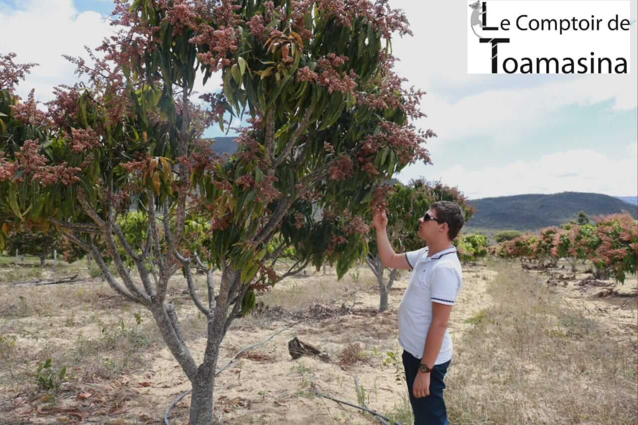 Arnaud Sion dans une plantation - acheter de la fève tonka