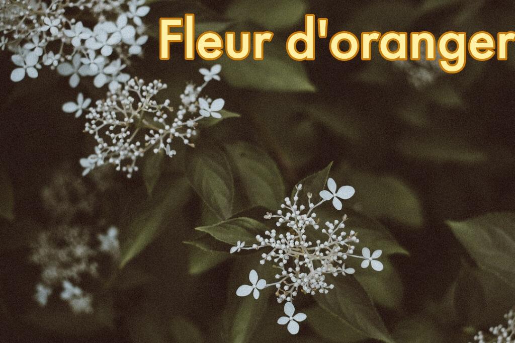 Extrato de Flor de Laranja Marroquino