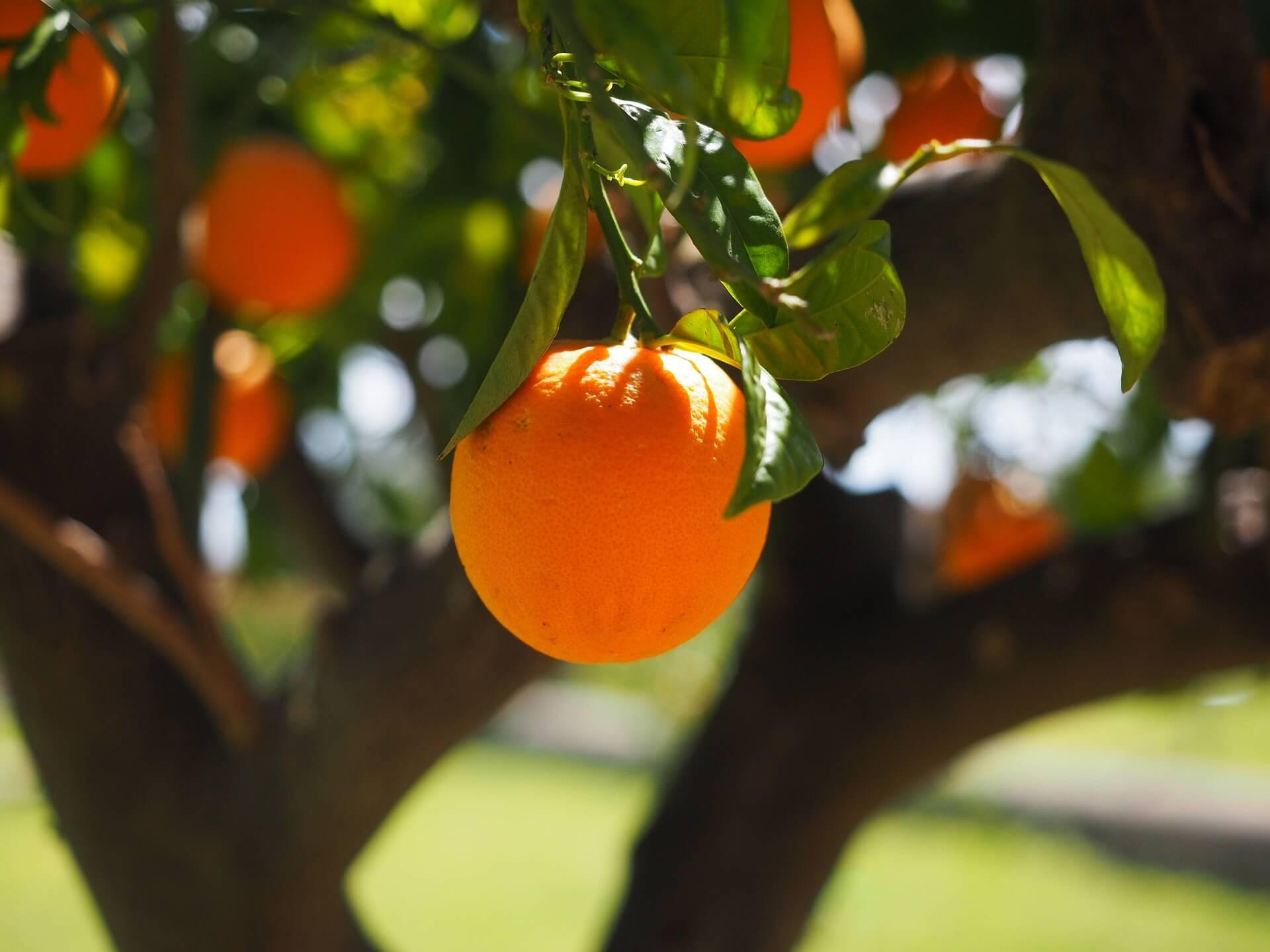 Achat et vente de fleur d'oranger à Pâtisserie