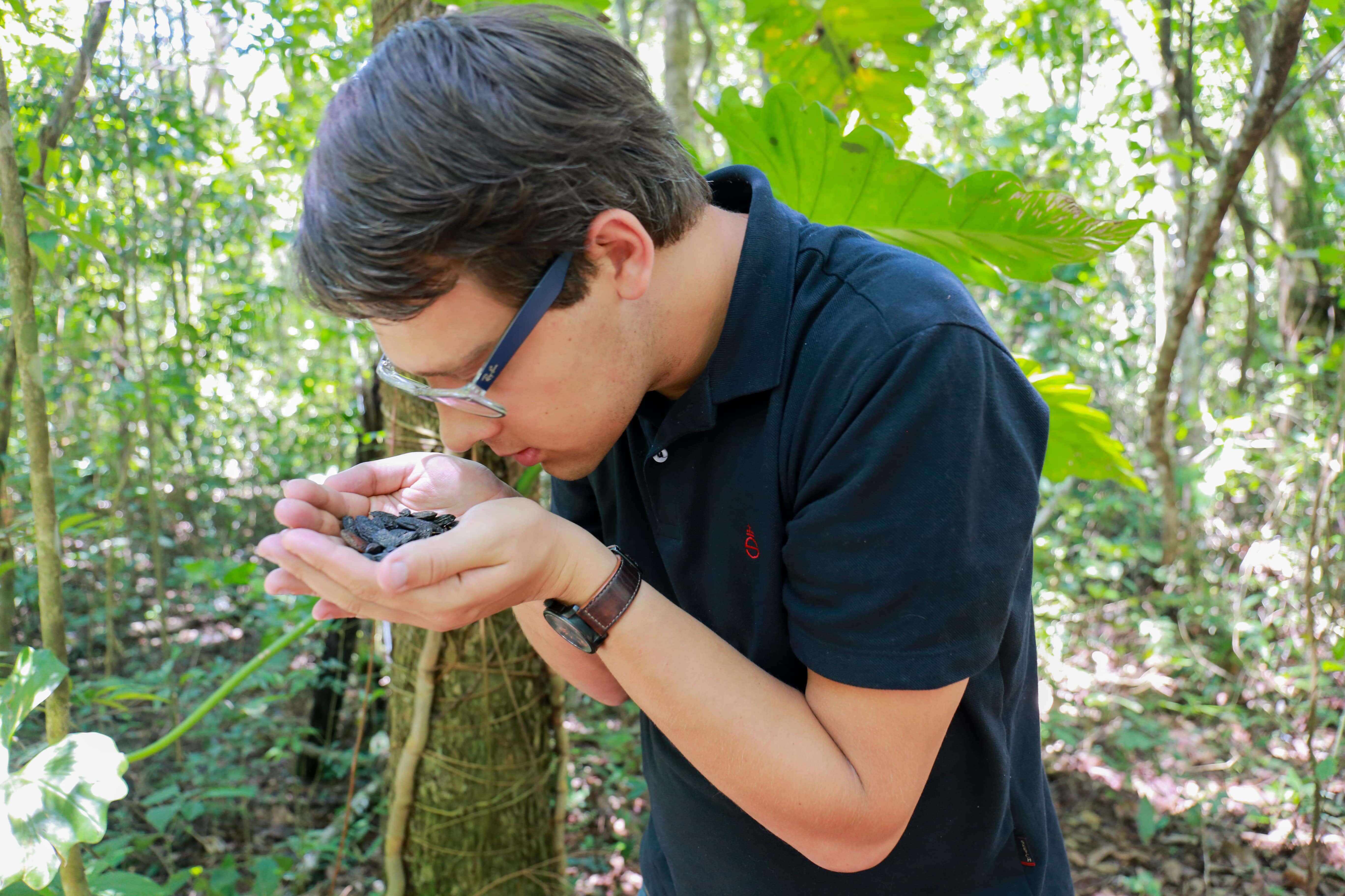 Feve Tonka Forêt Amazonienne