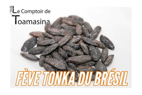 Tonka beans Amazonia Brazil - David partner producer of Comptoir de Toamasina in tonka bean and vanilla