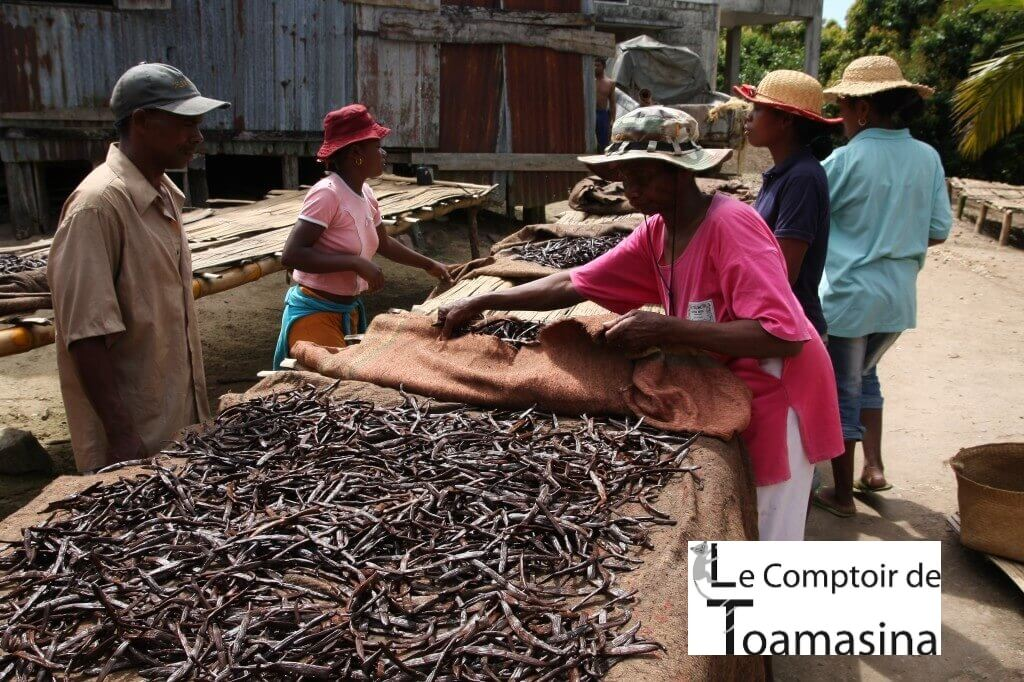 Sorting the vanilla pod of Madagascar Golg Premium Excellence