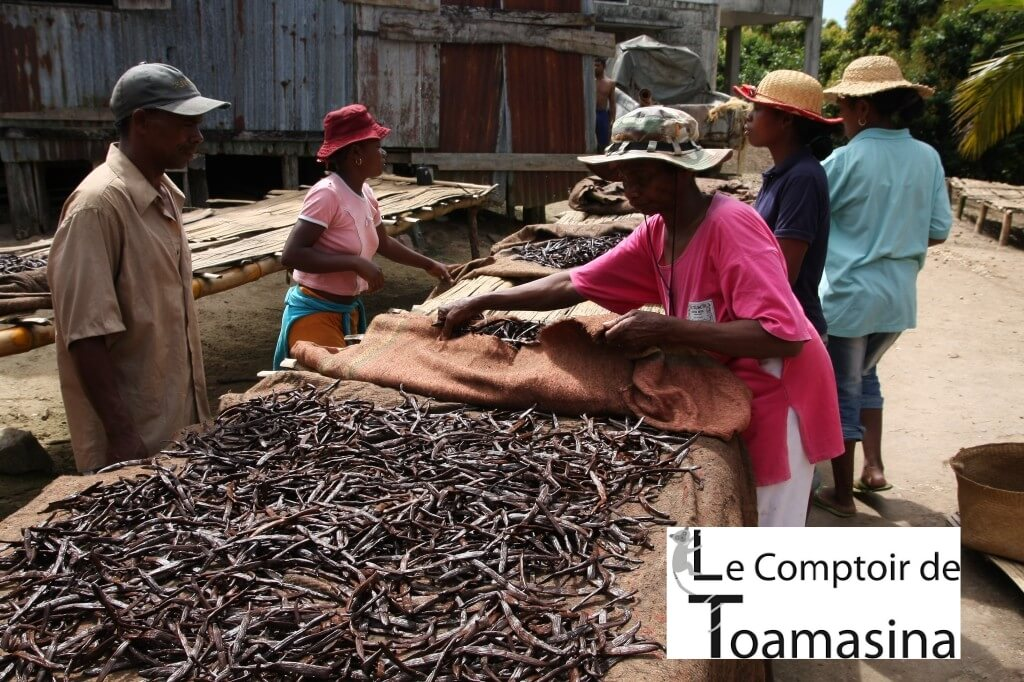 Sale of the best vanilla beans from Madagascar